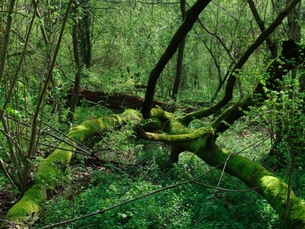 Ucciso da un colpo di fucile fra i boschi: l'appello dei Carabinieri