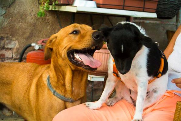 Silenzio, abbaio io: festa dedicata ai cani
