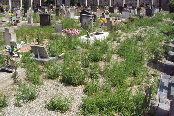 Cimitero: erba alta e tombe che sprofondano. L'indignazione dei novaresi