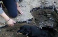 I Vigili del Fuoco salvano cagnolino bloccato in un canale