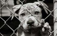 Diamogli una zampa: colletta alimentare in favore degli amici animali