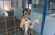 Cani rinchiusi in via Ravenna: problema risolto, ma restano tante domande