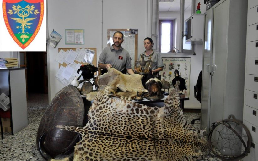 Sequestrata una collezione di animali protetti imbalsamati