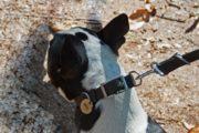 Cani e padroni: 76 multe per non aver raccolto le deiezioni