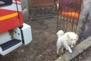 Cane precipita in uno scantinato, salvato dai Vigili del fuoco