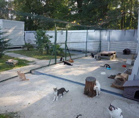 Emergenza cibo per i gatti del Gazurlo