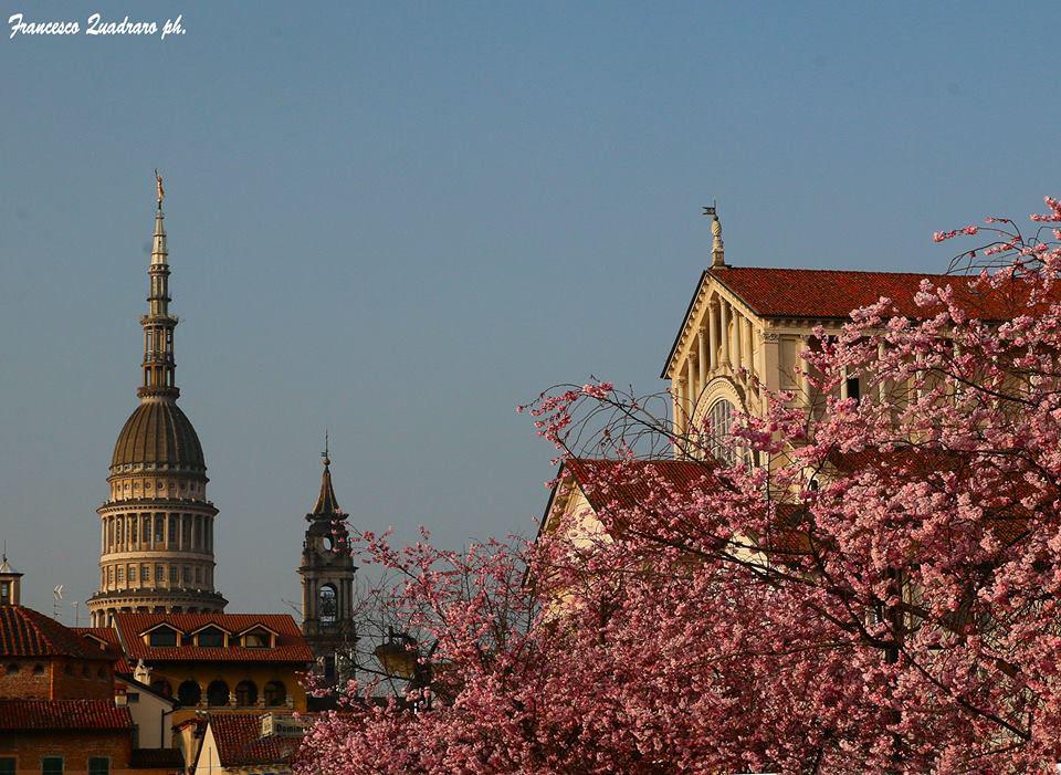 A Novara sboccia la primavera: le foto dei nostri lettori