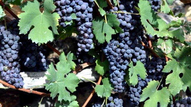 Maxi truffa delle etichette di vino: in manette due novaresi