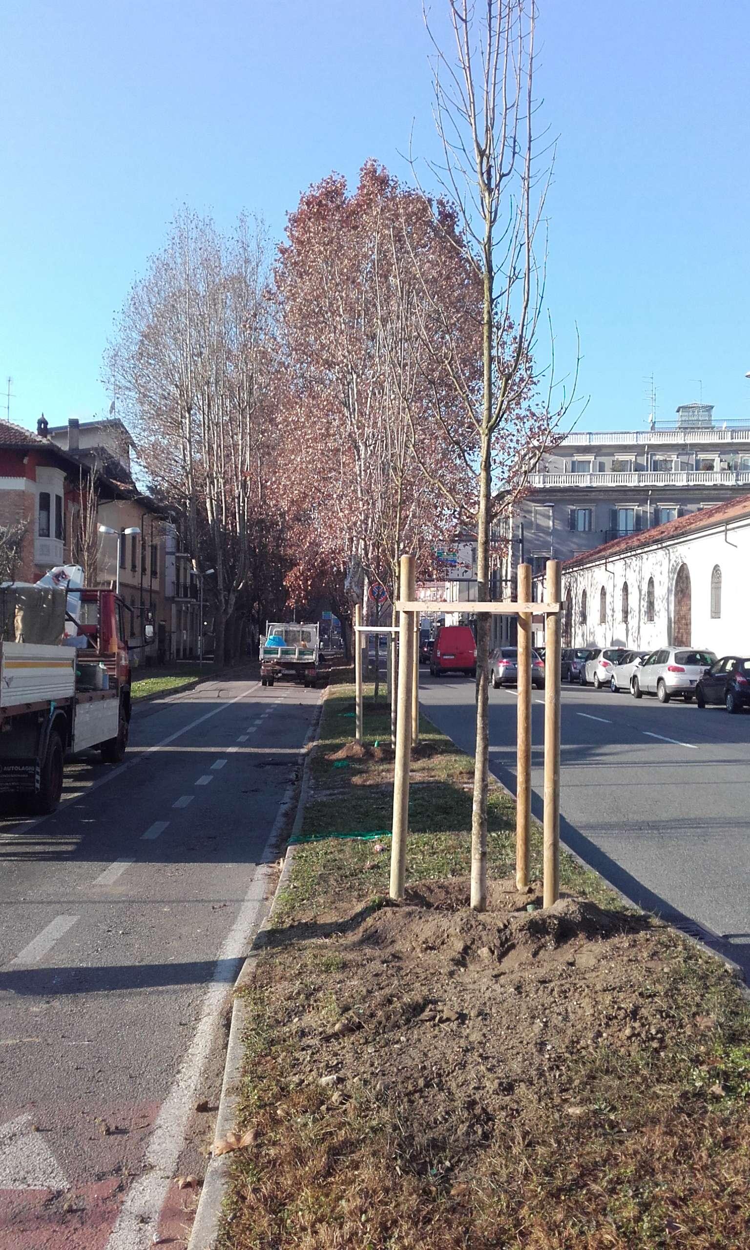 alberi2