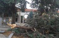Maltempo: danni ingenti ad Oleggio. Al cimitero cadono alberi e una statua