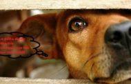 Botti di Capodanno: mentre si attende, a Novara, l'ordinanza, consigli a tutela degli animali
