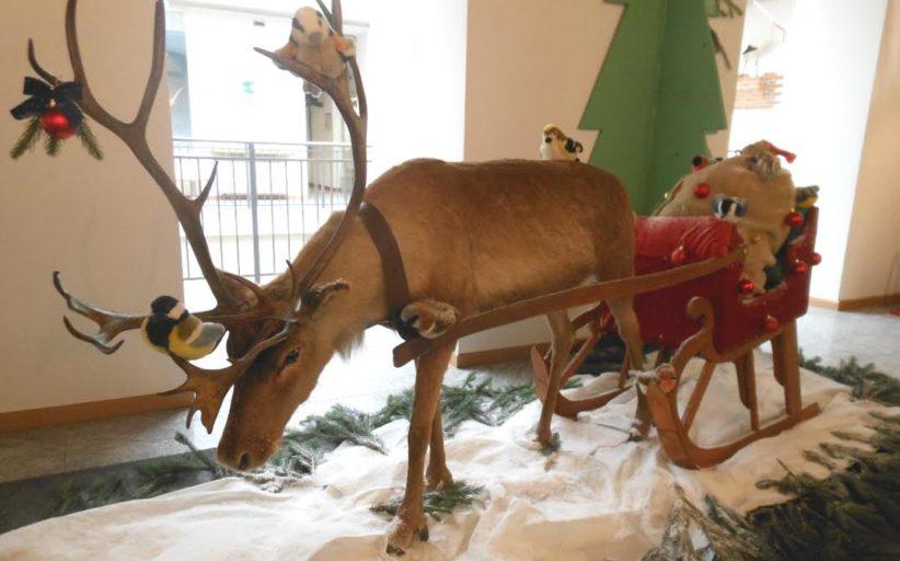 La renna di Babbo Natale, al Museo Faraggiana, regala doni ai bambini