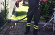 Rettile in casa: intervengono i vigili del fuoco a Borgoticino