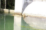 I vigili del Fuoco salvano un capriolo caduto nel Canale Mora