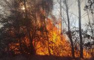 Borgomanero: brucia un bosco in zona Beatrice