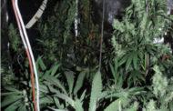Fiamme a Casaleggio. E nella casa, i pompieri trovano una coltivazione di marijuana