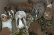 Coniglietti abbandonati davanti a un supermercato
