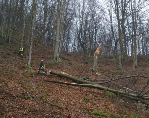 Inutili i soccorsi ad Armeno, muore schiacciato dall'albero che stava tagliando