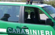 Caseificio scaricava scarti nella roggia: puzze fra Novara e Vercelli