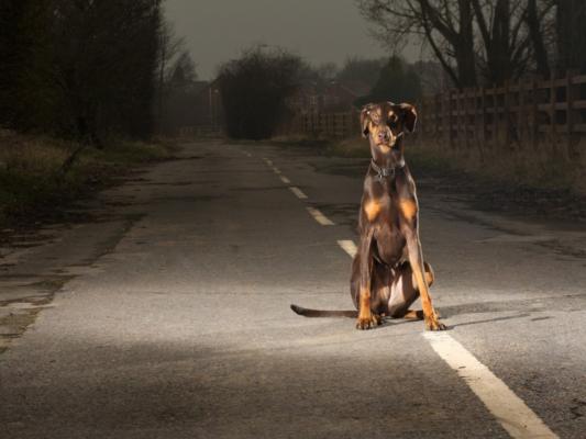 anti abbandono cani ANPANA Novara