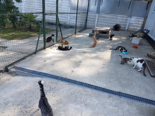 cibo gattile Novara gazurlo Enpa