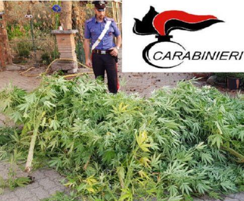 Piantagione di Cannabis in giardino, trentenne nei guai
