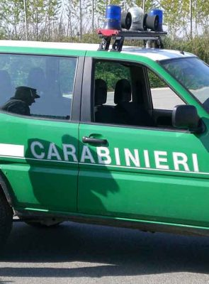 controllo in stalla sequestrati 53 vitelli