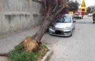Albero abbattuto dal vento cade su auto in sosta