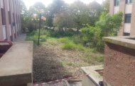 Pulita l'area verde esterna al liceo Antonelli