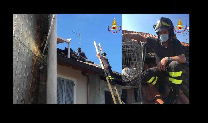 Cattivo odore da un mezzo abbandonato a San Pietro Mosezzo. I Carabinieri Forestali lo sequestrano e denunciano il titolare