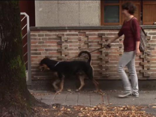 Sostanze tossiche per evitare il passaggio dei cani. La Polizia Locale denuncia un 70enne